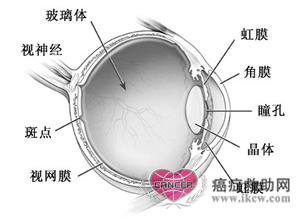 眼的 解剖 结构